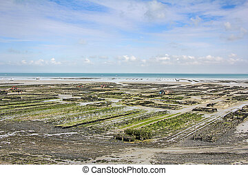 Oyster parks Cancale - Oyster parks in Cancale, France at...