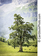 Tree with smoke in alps - Tree in the Alps of Austria in an...