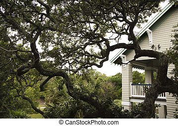 House with live oak tree.