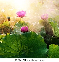Lotus - beautiful lotus flower in blooming at sunset