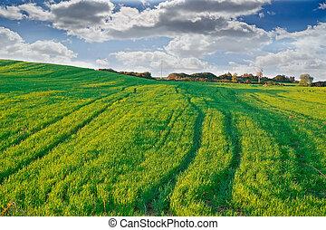 cielo, dramático, verde, pradera