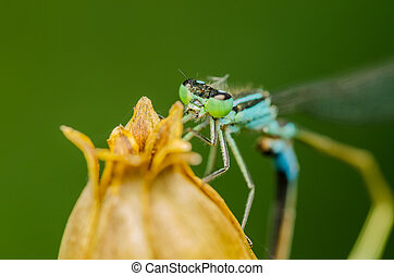Blue Dragonfly Macro Close Up Details Photo