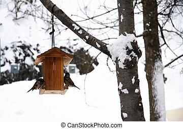 maison, moineau, manger, hiver