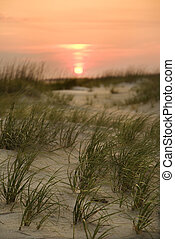 Sun setting over beach - Sun setting over beach sand dune on...