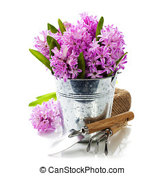 Beautiful Hyacinths and garden tools - Beautiful Hyacinths...