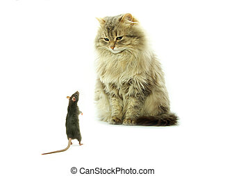 cat and rat - funny rat and cat isolated on white background...