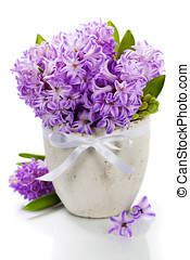 Beautiful Hyacinths in vase over white