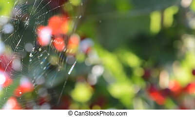 The gentle breeze blowing to spider