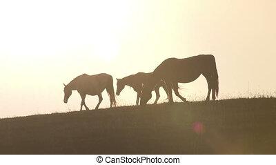 Horses against backlight