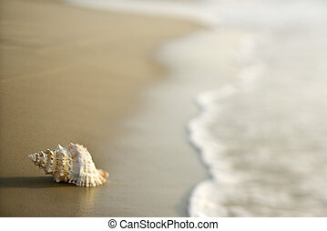 Conch shell on sand. - Conch shell on beach  with waves.