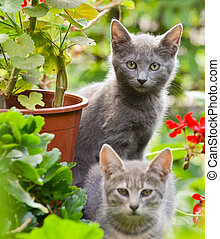 Cute kittens in garden