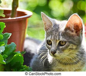 Cute kitten in garden