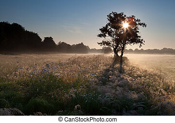 star sunbeams through tree silhouette in misty morning