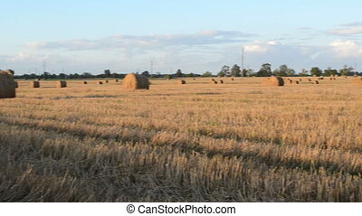 field straw bales rolls - panorama view of agriculture field...