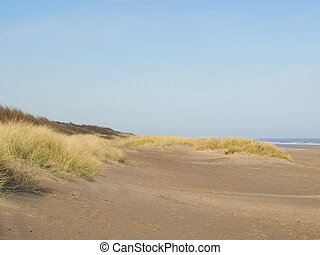 A sandy beach with grassy dunes and sea - sandy beach with...