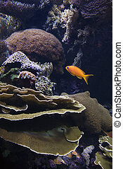 Saltwater fish and coral - Fish swimming around coral in...