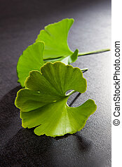 Ginkgo Biloba leaves isolated on black background. Good...