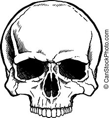 Black and white human skull without a lower jaw.