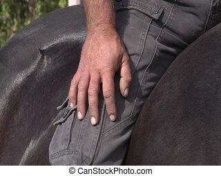 Man stroking the black horse