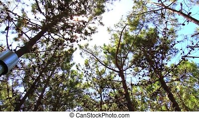 Trees in Sunlight - Trees in the Sunlight in Mar de las...