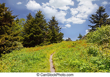 Roan Mountain - Hiking trail on Roan Mountain, Mitchell...
