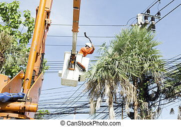 Electrician worker in cherry picker solve palm leaf and...