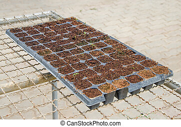 Seedlings vegetable in plastic tray