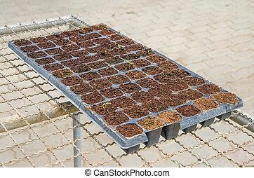 Seedlings vegetable in plastic tray - Seedlings vegetable in...