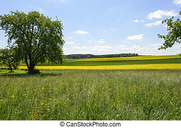 country summer landscape, Geisingen, Baden - relaxing...