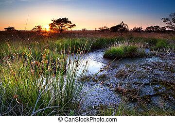 summer sunset over swamp