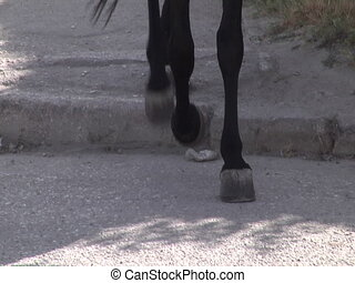 The horses ' hooves on the pavement