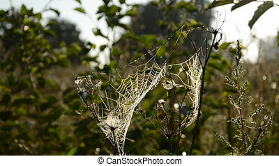 summer end time dewy spider web