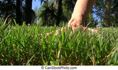 caressing grass - woman hand touching green grass at a park...