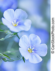 Blue flax flowers, tinted in blue tones