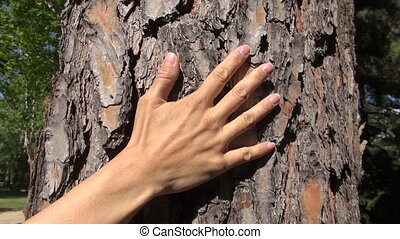woman hand caressing tree - woman hand touching trunk cork...