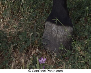 Horse hoof on the grass