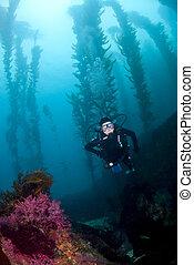 Scuba Diver in the Kelp in Cataina