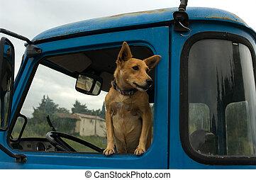 Dog-waiting