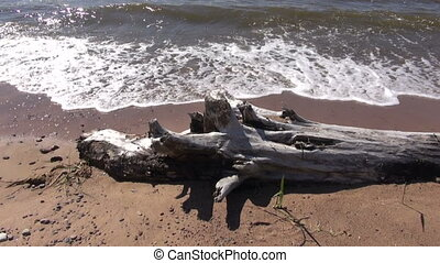 old dead  tree trunk on sea beach