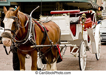 Brown Horse and White Carriage - A horse and carriage in a...