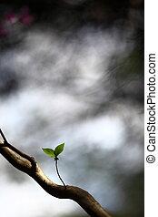 deux, solitaire, pousse feuilles, arbre