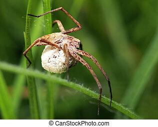Macro spider (Pisaura mirabilis) of profile on leaf...