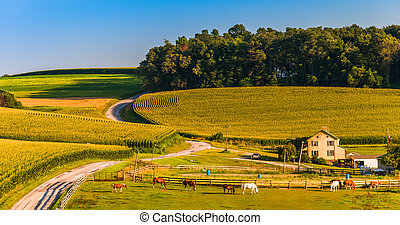 Horse farm and country road on a hill in rural York County, Pennsylvania.