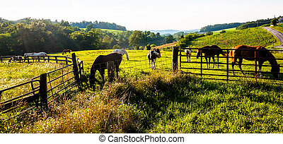 Horses and fences in a farm field in York County,...