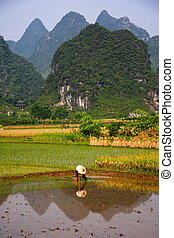 Rural China Countryside rice field work - Rice Field Work in...