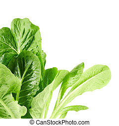 Roman salad lettuce leaves