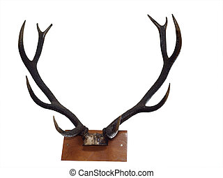 10 Point Mounted Stag Horns isolated with clipping path...