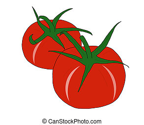 tomatoes - illustration of two red tomatoes on white...