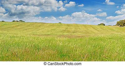 綠色, 天空, 草地