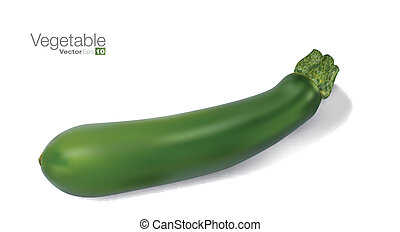 Fresh vegetable marrow in editable vector format